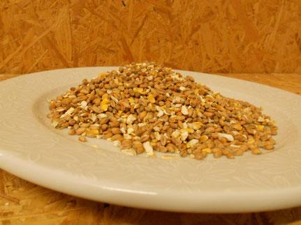 Weizen (nur als Keimlinge oder für Mast)
