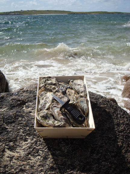 open Box of 25 Gigas Oysters with oyster knife on a rock in front of the wild Atlantic ocean