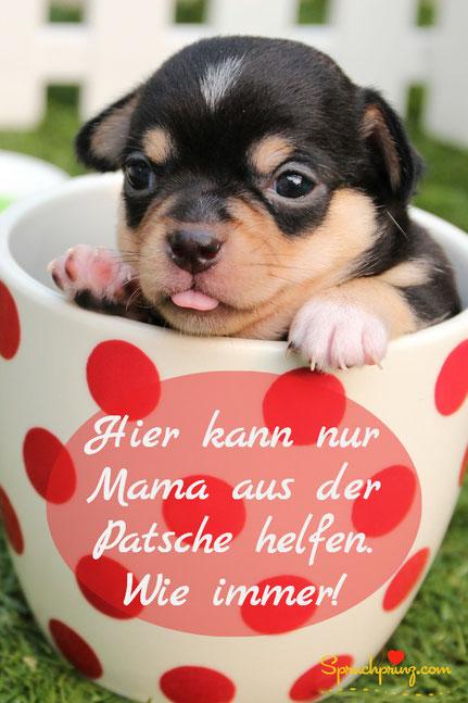 Muttertag Zitate lustig Hund