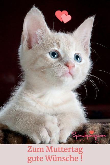 Wünsche zum Muttertag Zitate Katze