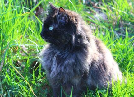 Barn Cat Program - Cowichan Cat Rescue