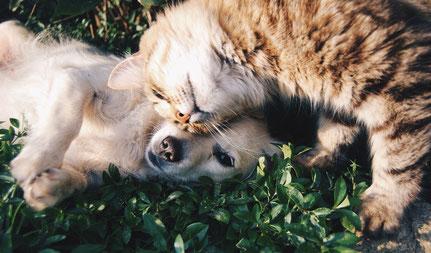 reiki animaux reiki chat reiki chien énergie animaux