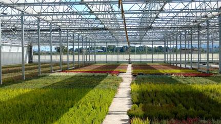 Vollständig zu öffnende Dachflächen ermöglichen unseren Pflanzen Freilandfeeling und schützen doch vor der Witterung.