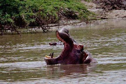 Wechiau Hippo Sanctuary