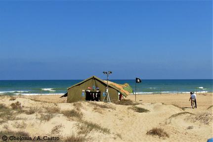 Campamento tortuguero en Valencia (España)