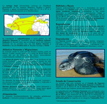 Folleto tortuga laúd (interior)