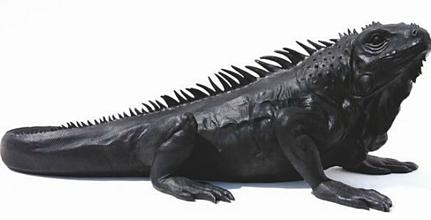 Leguan schwarz, 140cm