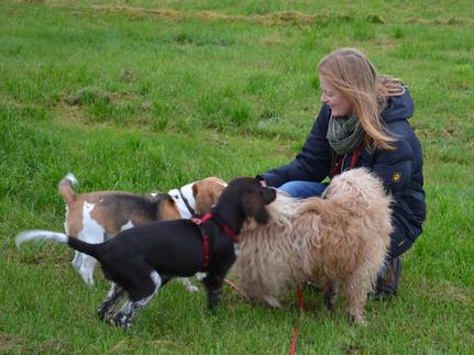 Drei Hunde mit Meike Mosen, Trainerin der Hundeschule MOMO - Hundeschule Bremen & Lilienthal