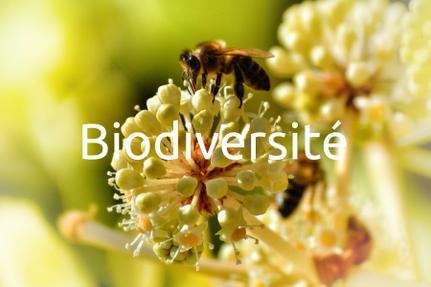 Formation Biodiversité