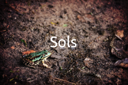 Formation Sites & sols