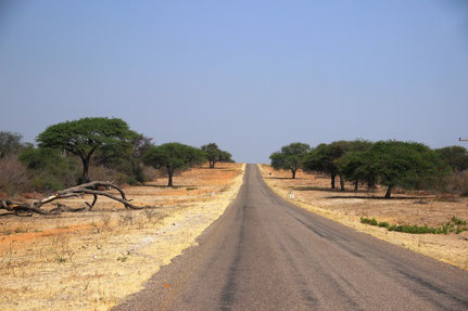 Bienvenue au Botswana !