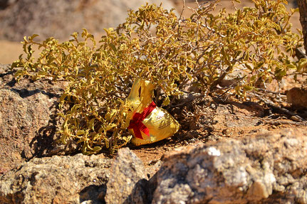 Osterhase in Namibia