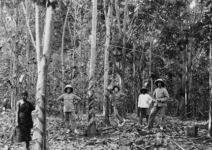 "Bildunterschrift: ""Five people among rubber trees, Singapore (...) Date: between 1890 and 1923"" An den Baumstämmen sind die Einschnitte zur Kautschukgewinnung zu erkennen. [Anm. des Verfassers], Bild: Library of Congress / Public domain.**"