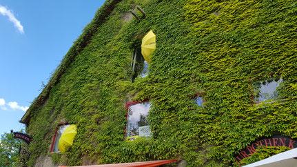 Der Rothener Hof zu Pfingsten 2020 Foto: Heidrun Klimmey