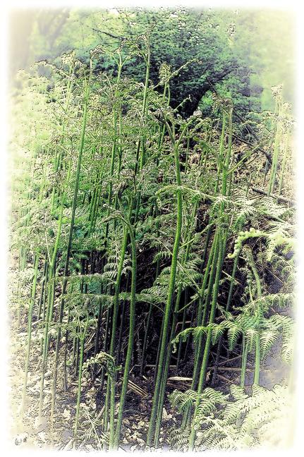 Der Farn-Wald