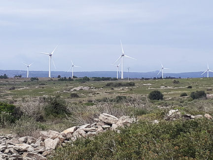 Randos Canétoises: Niveau 1 Circuit de la Palme Pla des Graniers Les Éoliennes le 7 novembre
