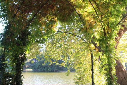 Lietzensee in Charlottenburg, Blick durch das Grün der Sträucher und Bäume auf den See. Foto: Helga Karl