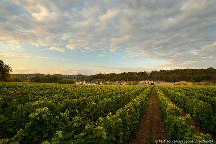 printemps-taille-ébourgeonnage-original-accolage-atelier-vigneron-vin-degustation-activite-insolite-vignoble-Vouvray-Tours-Amboise-Touraine-Vallee-Loire-Rendez-Vous-dans-les-Vignes-Myriam-Fouasse-Robert