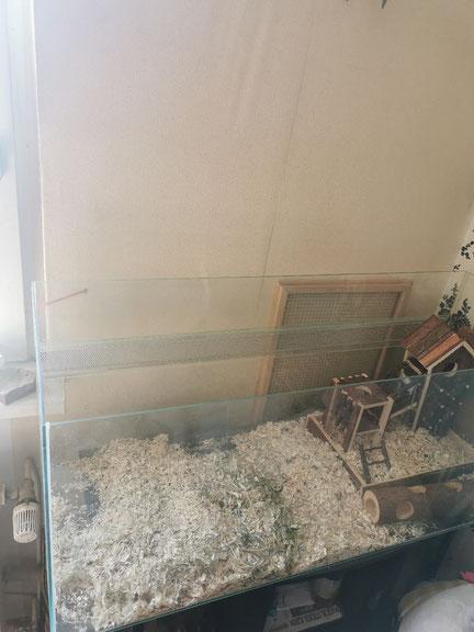 Als erstes ein Mal Mäuse Gehege sauber machen.
