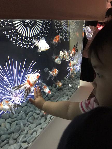 2018年9月2日 水族館に行ってきました