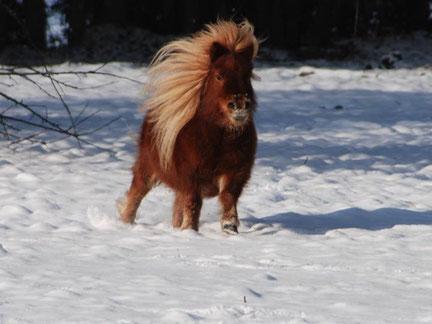 Dieses Foto von Engel ist die Vorlage für das Pferdegemälde (Foto: N. Keck-van Walbeek)