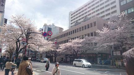 市ヶ谷の桜並木。撮影時は満開ですが、現在はもう葉桜に・・・
