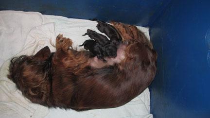Am 09-09 wurden per Ks,3 Rüden und eine Hündin geboren!