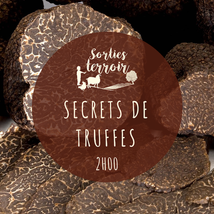 Truffe Chinon Houette truffière