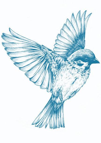 La langue des oiseaux et les maladies