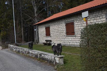 Frini und Lady vor der Skylla Hütte