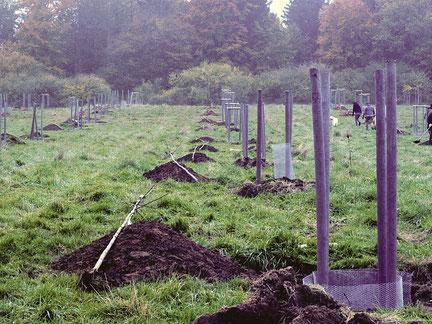 Pflanzung neuer Obstbäume auf dem Vereinsgelände der Grube Fortuna 2015. Foto: NABU/Marlies Gräwe