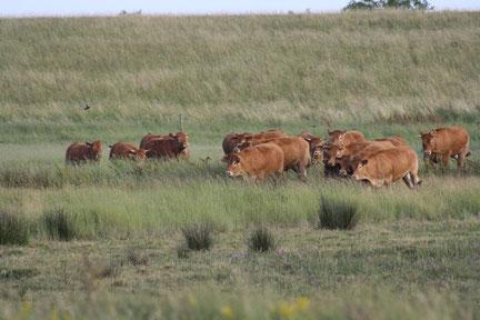 Natuurboeren zijn landbouwers in natuurreservaten