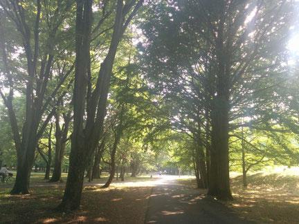 音叉ヒーリング体験と緑豊かな公園