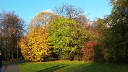 Münster Herbst Autumn
