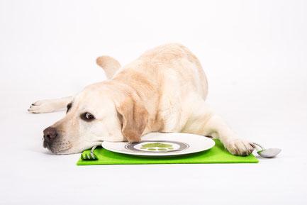Beratung Bei Epilepsie Fresskrapf Hundeernährungsberatung