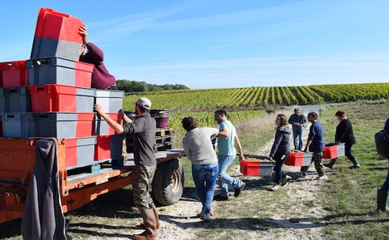 vendange-manuelle-atelier-vigneron-vin-degustation-activite-insolite-vignoble-Vouvray-Tours-Amboise-Touraine-Vallee-Loire-Rendez-Vous-dans-les-Vignes-Myriam-Fouasse-Robert