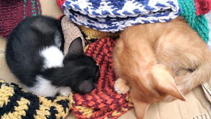 モロッコ旅行/シャウエン/可愛いネコ。