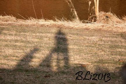 Schattenbild mit Mia & Blue