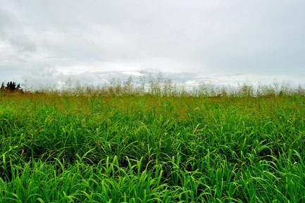 Potae Napognah Navogoh.  Territorio Qom Comunidad La Primavera