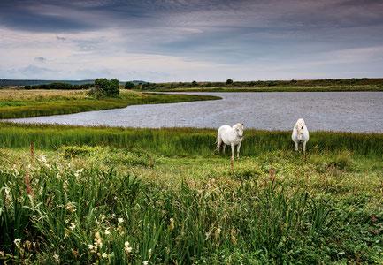 Pferde am See