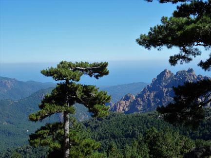 Motorradreisen Blick auf Bäume, Felden und das Meer