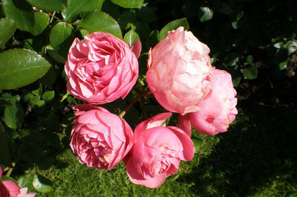 Tampere top things to do - Rose Gardens - Copyright  Sirpale79
