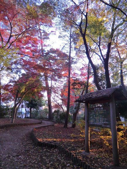 紅葉した木々が美しい園内