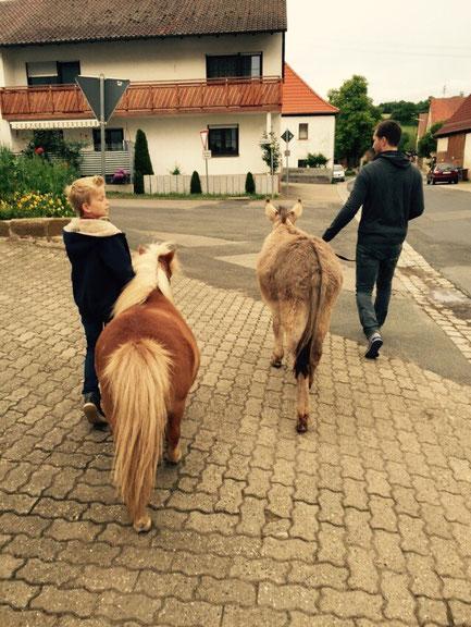 Flocke und Leo, Mr. Tom  und Markus (erste mal einen Esel geführt! :-))