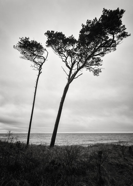 Ahrenshoop, Windflüchter, trees, Holger Nimtz, Fotografie, seascape, Baltic Sea, black and white, b&w, black, white, photography, wallart, silence, calm, loneliness, Langzeitbelichtung, longexposure, still, fineart, coast,