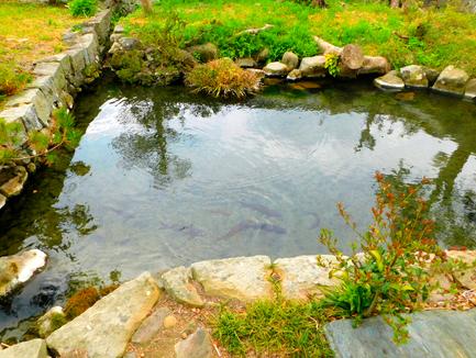 稲田に流れる山水でつくられた池
