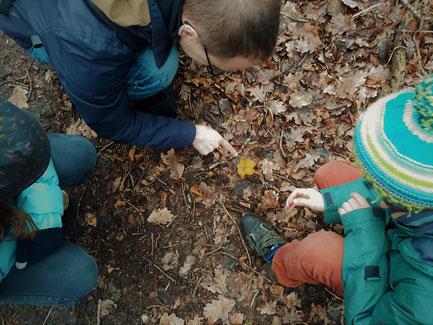 Auch wenn es im Winter keine Pfifferlinge zu finden gibt, gibt es viele andere Pilze zu bestaunen