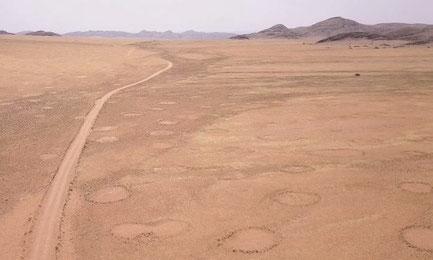 Cercles de fées ; Namibie