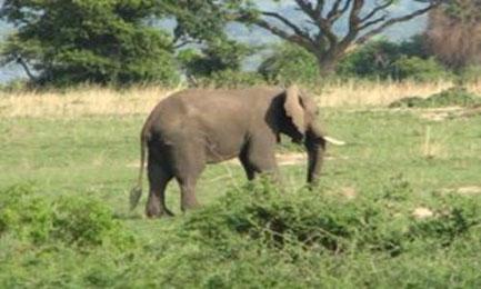 uganda-tracking-tours-gorilla-tracking.jpg