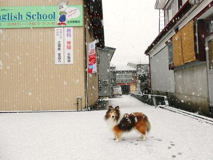 2012.12.01 初雪の日
